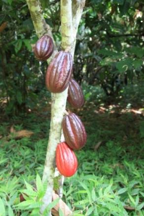Kakao